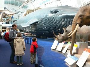 Mammals-Gallery-at-the-Natural-History-Museum-London