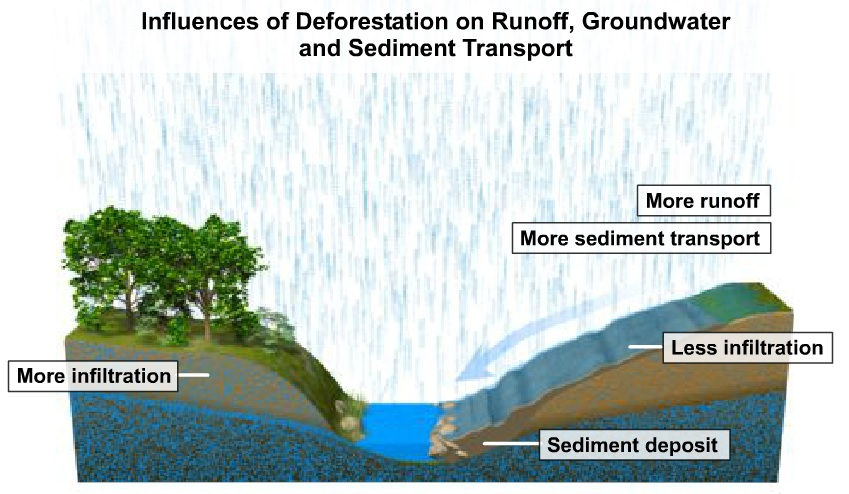 What Drives Tropical Deforestation  Potsdam Institute for