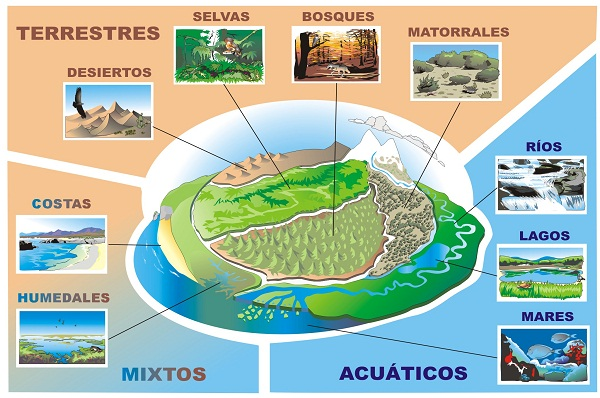 26-ejemplo-de-ecosistema-imagen-01